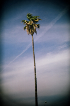 55940024_palm_on_sunset_by_Sherry_Lee_2008.jpg