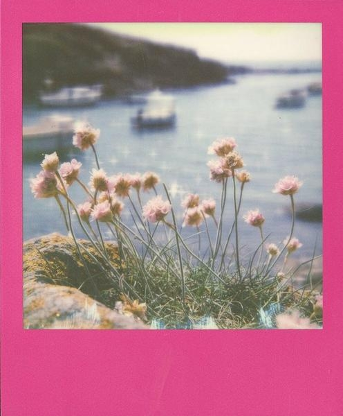 Impossible Instant Color Film for 600 - Hot Pink Frame - 8 Exposures ...
