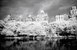 Infrared Photography Tips